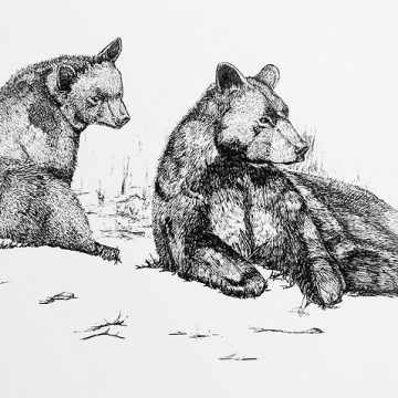 Field Illustration: Bears