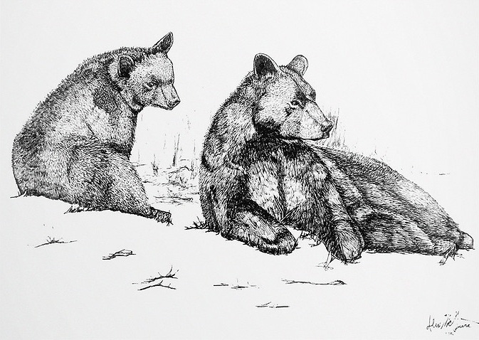 Field illustration, Micoron pen on Bristol board, by Alex McGuire