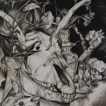 Charcoal drawing by Alyssa Campbell