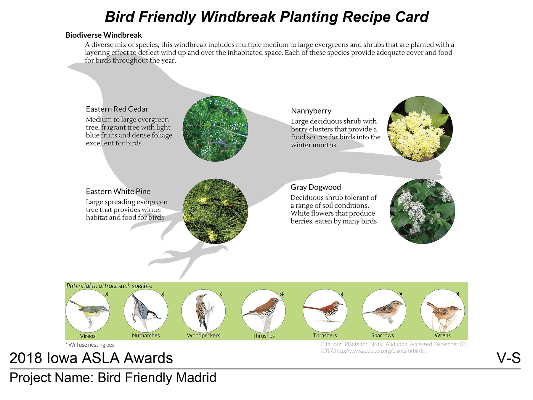 Bird Friendly Madrid Windbreak Recipe Card